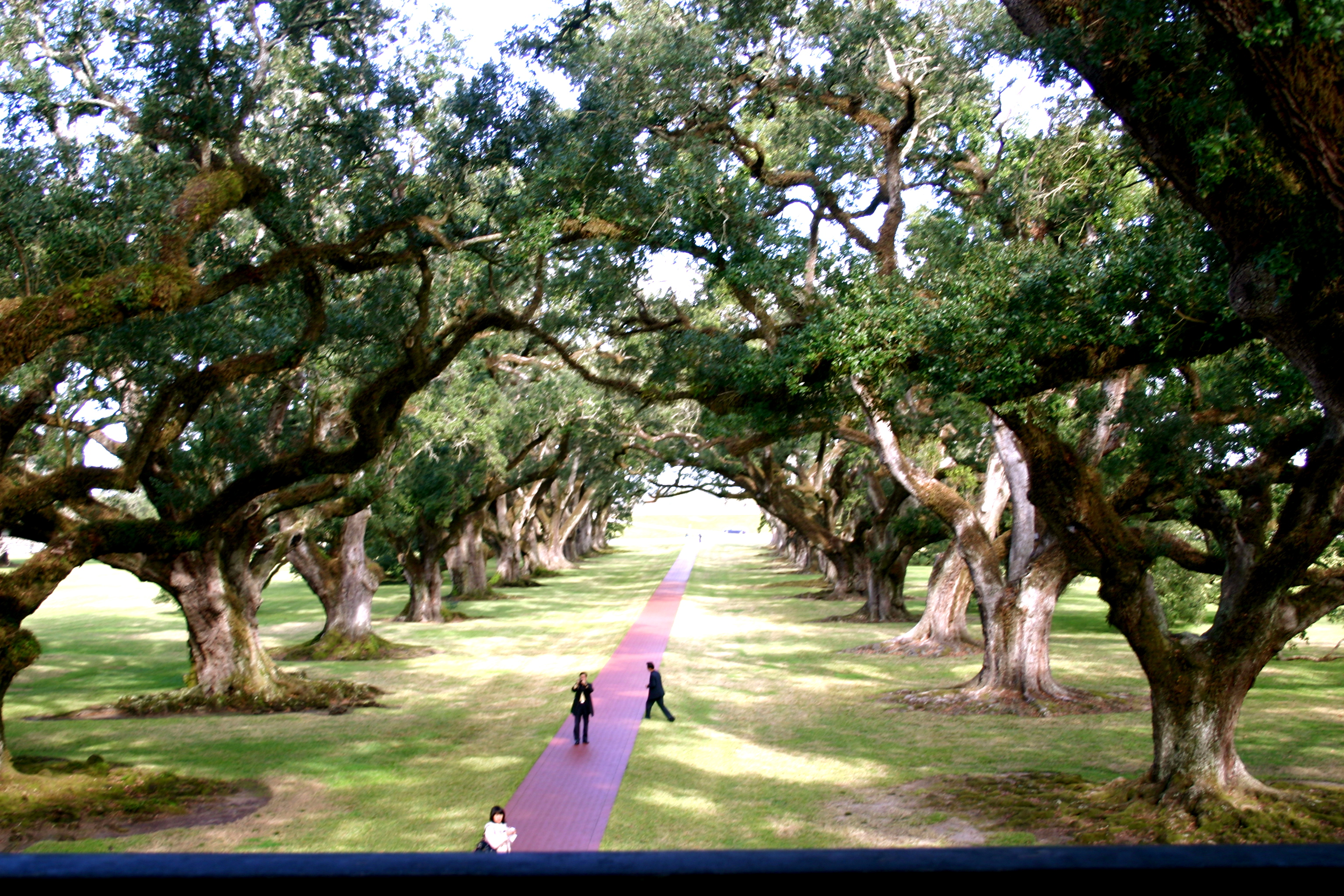 A View of The Oaks From the Plantation Blacony