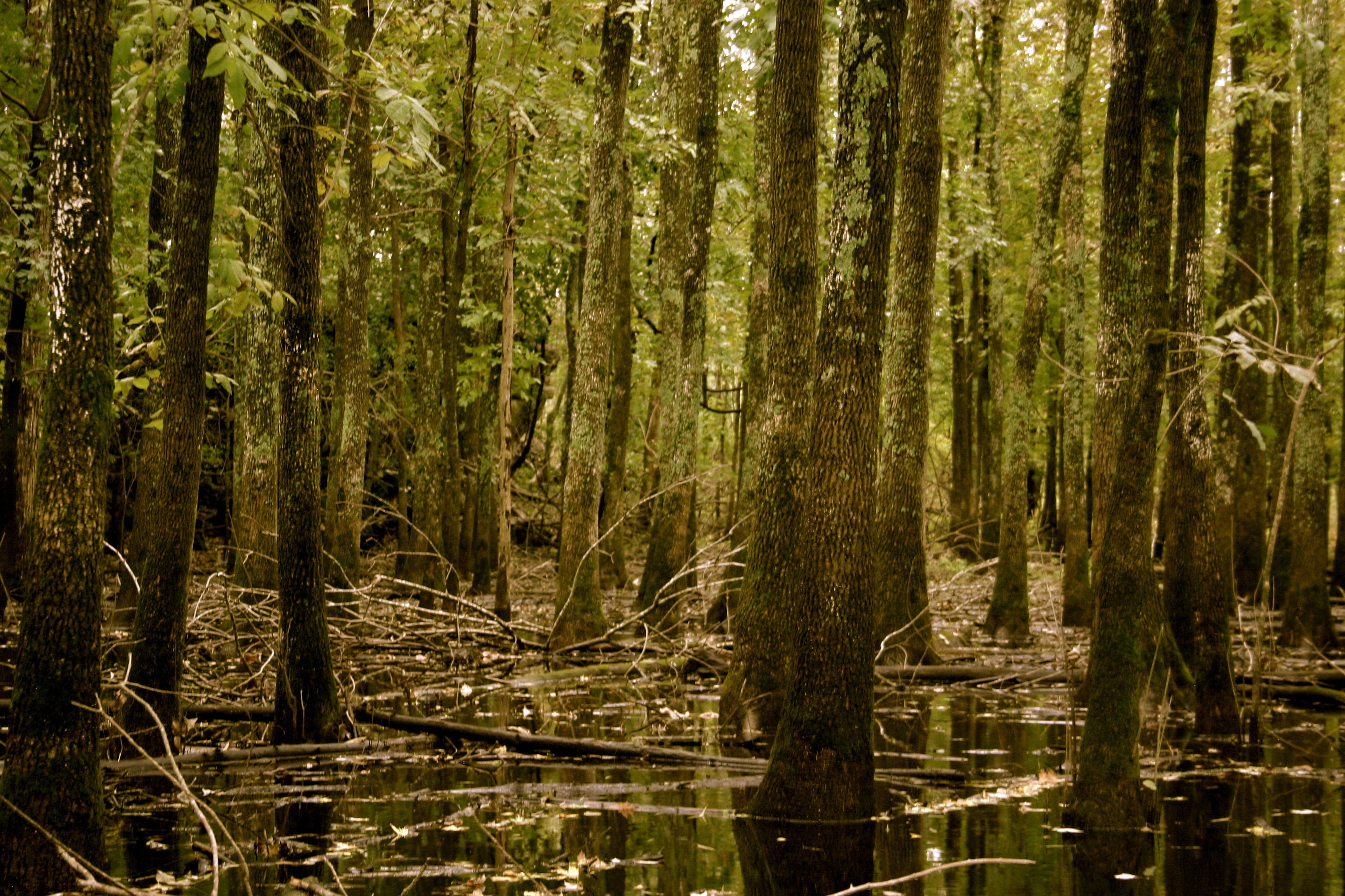 One of the Swamp Areas