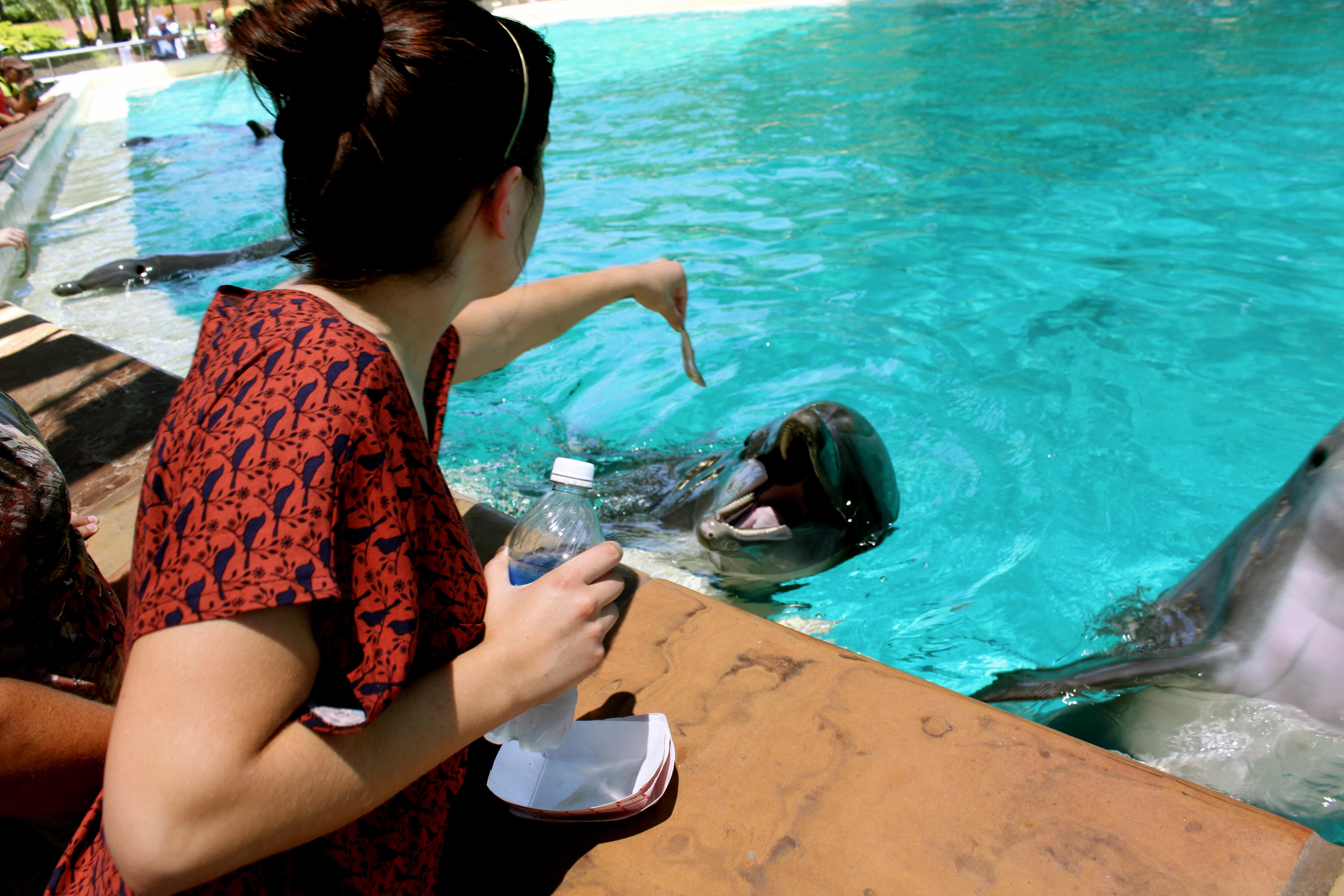 Me Feeding the Dolphins