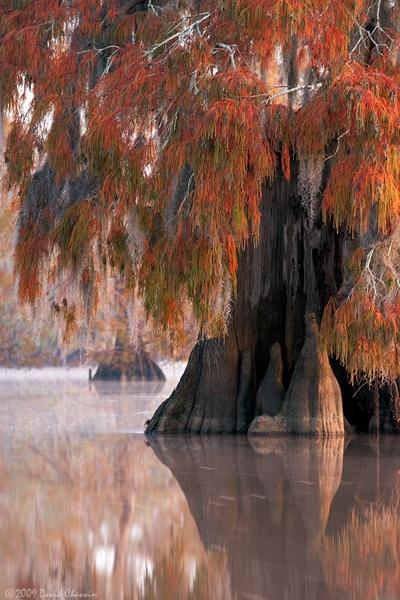 Fall Louisiana