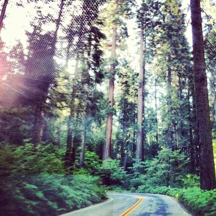 RoadtoWanderlust Sequoia