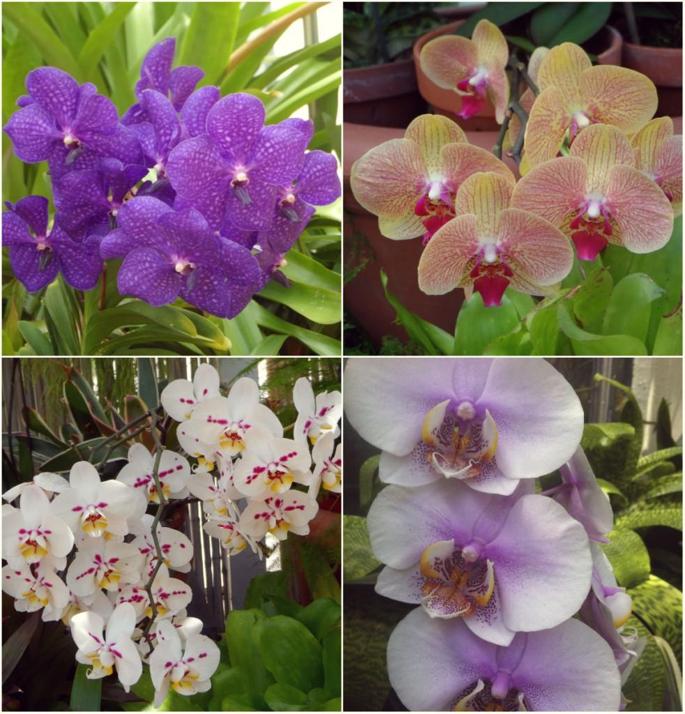 collageorchids