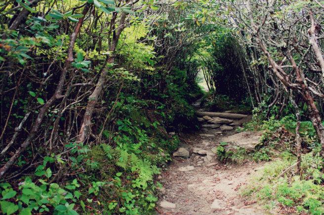For The Love Of Wanderlust 39 S Blue Ridge Parkway Guide For The Love Of Wanderlust
