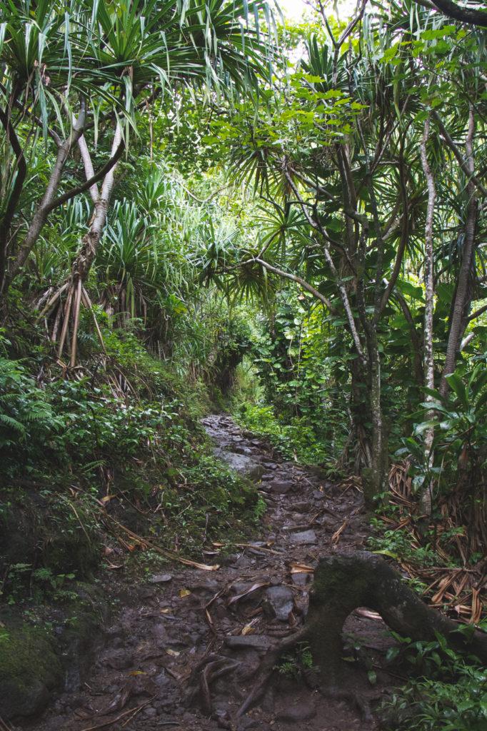 hanakapiai-falls-trail-10-of-37