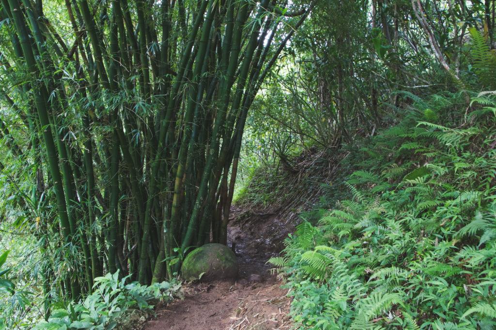 hanakapiai-falls-trail-25-of-37