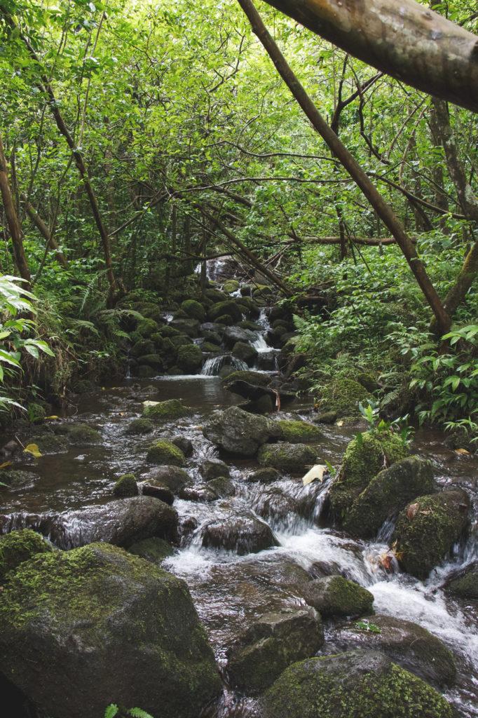 hanakapiai-falls-trail-29-of-37