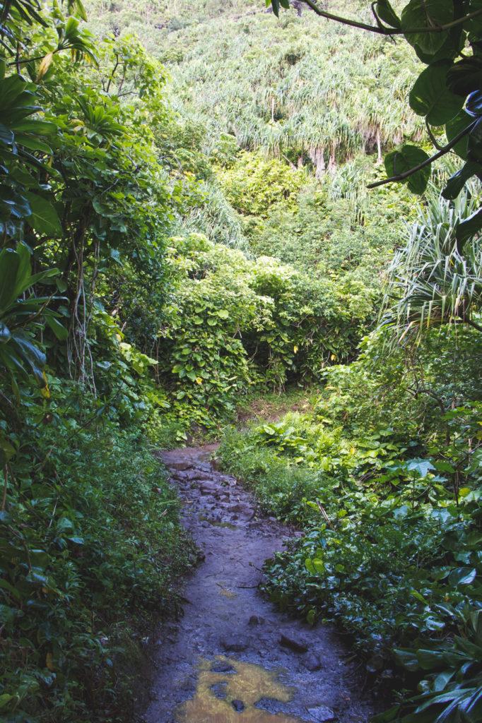 hanakapiai-falls-trail-3-of-37